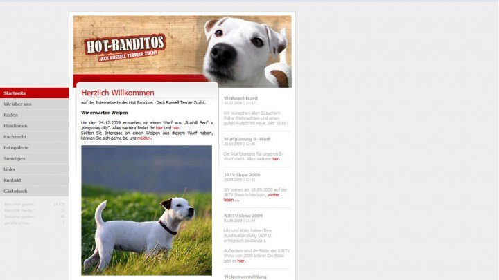 Hot-Banditos | Jack Russell Terrier
